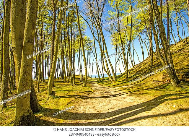 forest at the Baltic coast in Poland