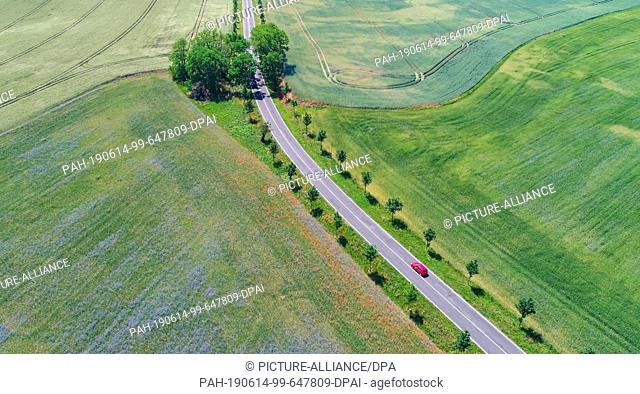14 June 2019, Brandenburg, Seelow: A road leads along different grain fields in which blue cornflowers and red poppies bloom (aerial photograph with a drone)