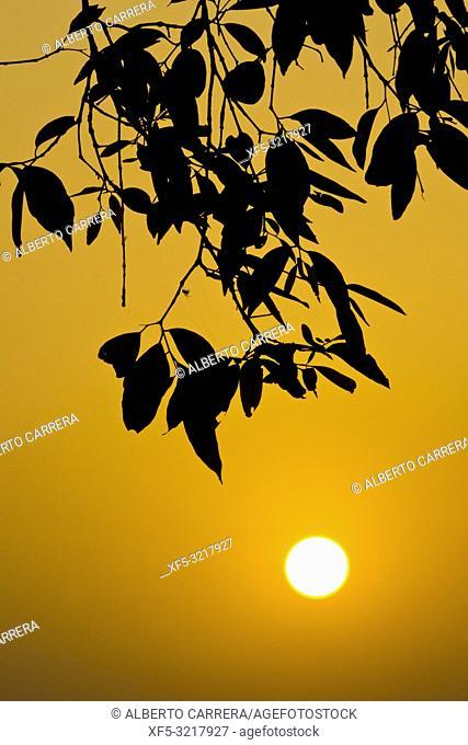 Sunset, Royal Bardia National Park, Bardiya National Park, Nepal, Asia