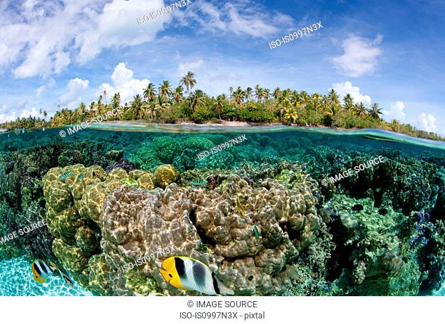 Over/under coral reef