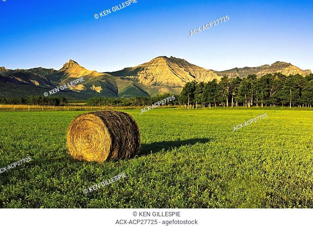 Single Bale of hay in field, mountains of Waterton Lakes National Park in background. Pincher Creek, Alberta, Canada