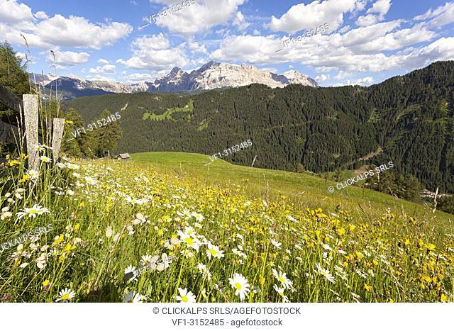 Longiarù, San Martino in Badia, Badia Valley, Dolomites, Bolzano province, South Tyrol, Italy. Meadows of Longiarù with Sasso della Croce in the background