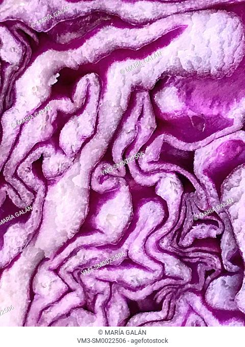 Cut red cabbage. Close view