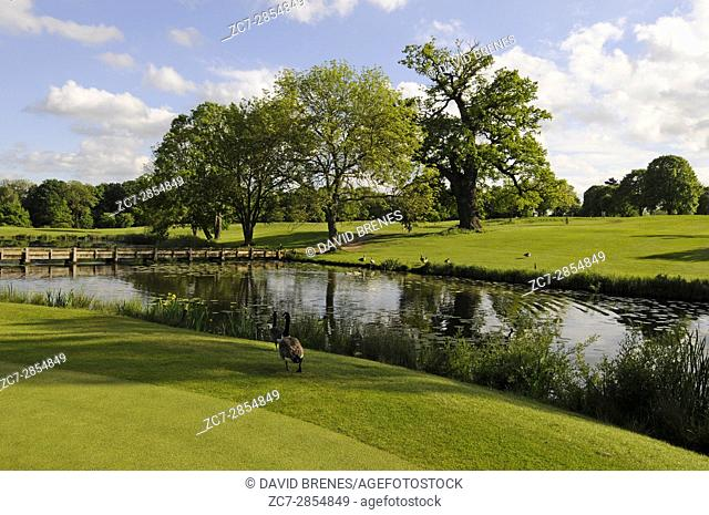 View over the lake beside the 15th Green, The Hertfordshire Golf Club, Broxbourne, Hertfordshire, England