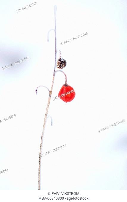 4 Season winter,abstract,alone,arctic,beautiful,bleak,bokeh,botany,branch,chilly,closeup,cold,cold temperature,cool,cool light,covered,crystal,day,detail,dry
