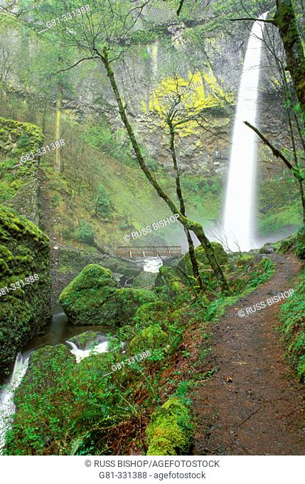 Elowah Falls and trail. Mount Hood National Forest. Columbia River Gorge National Scenic Area. Oregon. USA