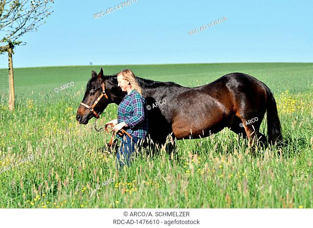 Woman with American Quarter Horse, Stallion, stud stallion, breeding stallion, old horse, 27 years of age