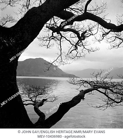 A large tree overhanging the water at the shore of a lake in the Lake District of Cumbria, creating an interesting silhouette and composition