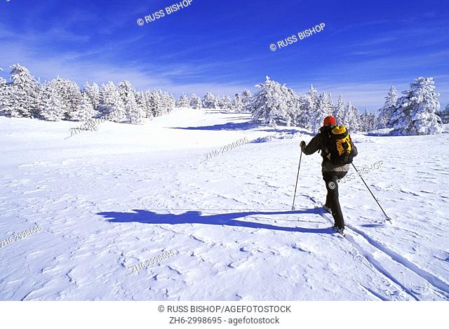 Backcountry skier on wind blown snow near the summit of Mount Pinos, Los Padres National Forest, California USA