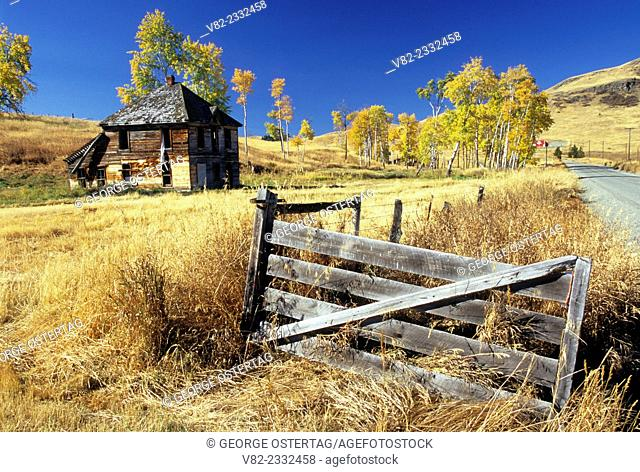 Old homestead with aspen grove in autumn, Okanogan County, Washington