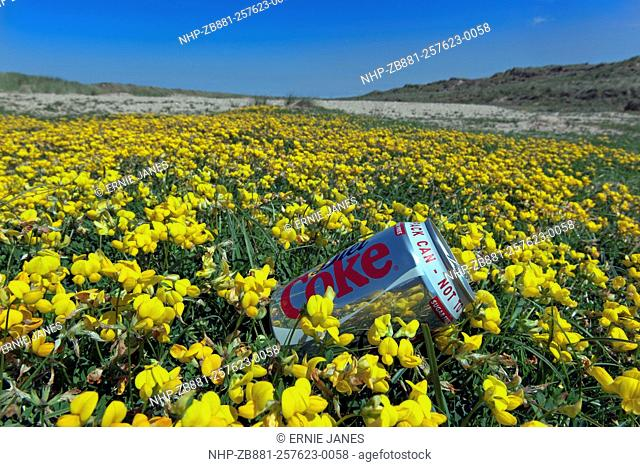 Discarded drinks can on Holkham dunes Norfolk in clump of Biirds foot Trefoil