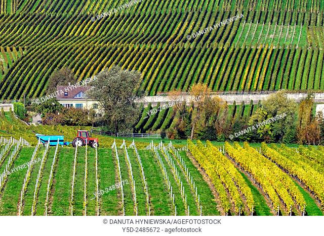 Europe, Switzerland, Canton Vaud, Morges district, Féchy, rural house surrounded by vineyards, early autumn