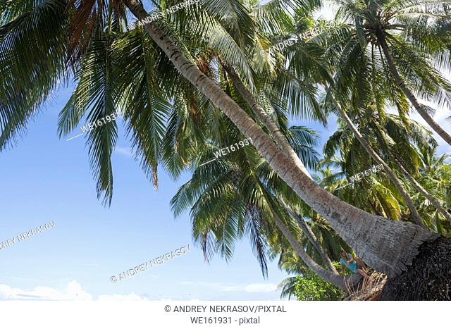 Coconut palms on the sky background. Fuvahmulah island, Indian Ocean, Maldives, Asia