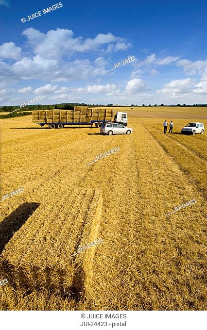 Farmers and trailer with straw bales in sunny, rural field