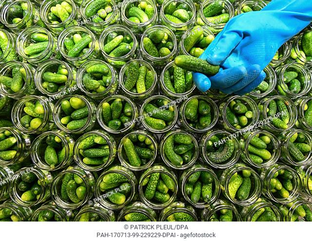 An employees of the company Rabe Spreewaelder Konserven GmbH & Co. KG holds a gherkin over glasses which have already been filled, in Boblitz, Germany