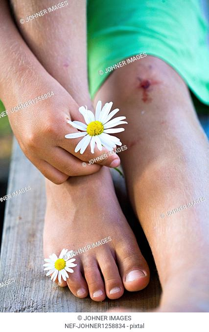 Boy with scrape on knee holding ox-eye daisy flowers