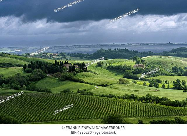 Typical green Tuscan landscape in Val d'Orcia with hills, farm, fields, trees, wineyards, olive plantations and cloudy sky, Montefollonico, Tuscany, Italy