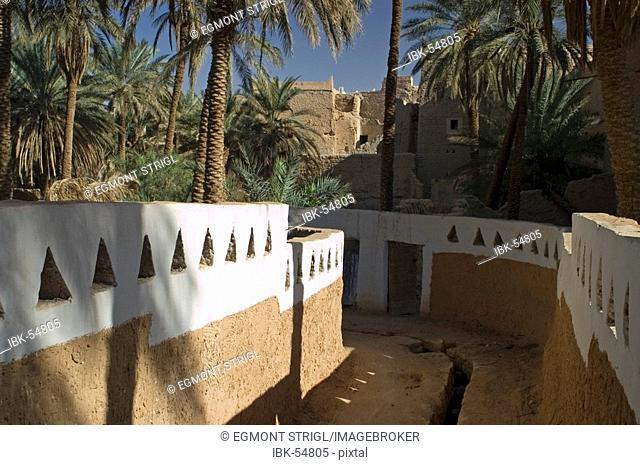 Palm garden at Ghadames, Ghadamis