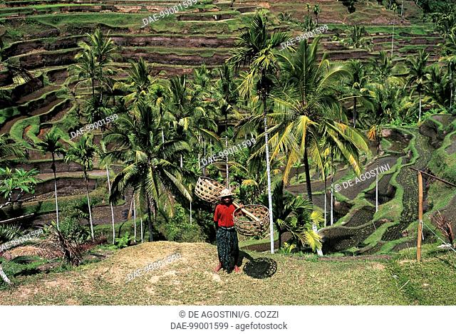 Rice terracing near the village of Ubud, Bali Island, Indonesia