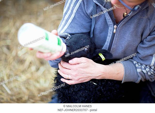 Woman feeding lamp