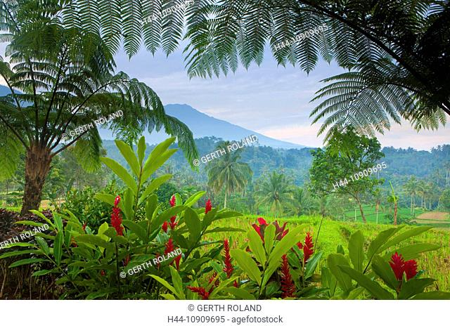 Licin, Indonesia, Asia, Java, trees, fern, flowers, mountains