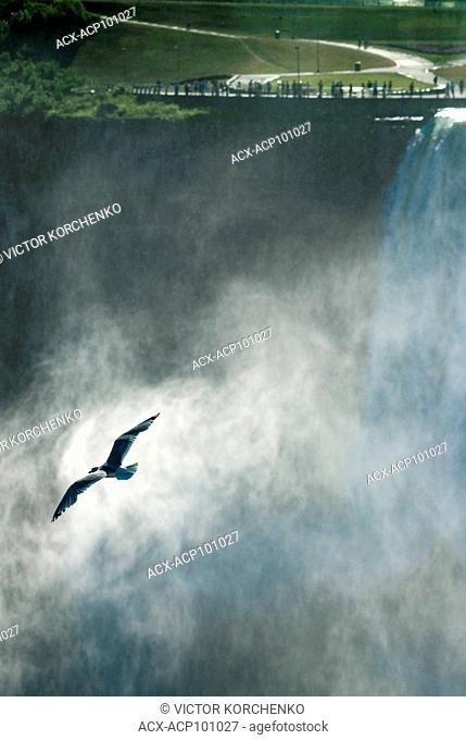 Gull flying in the mist of Niagara Falls