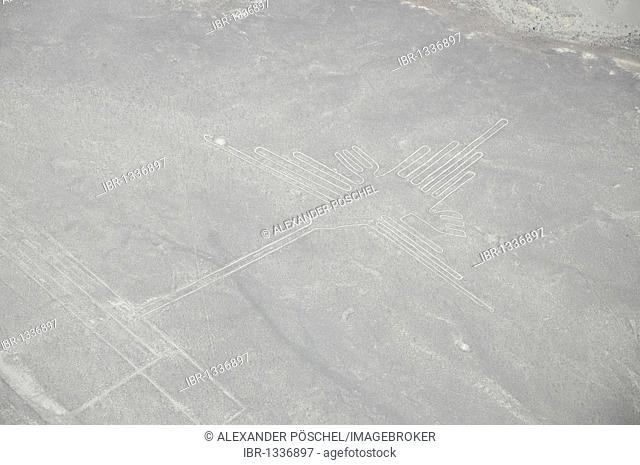 Hummingbird, 96m, Nazca Lines, geoglyphs in the desert, Nazca, Peru, South America, Latin America