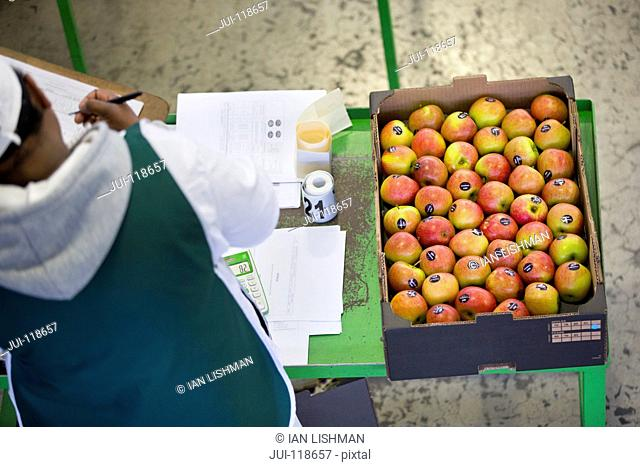 Workers Packing Apples Into Boxes In Fruit Processing Plant