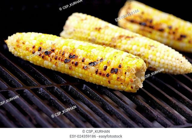 Corn roast on barbecue grille