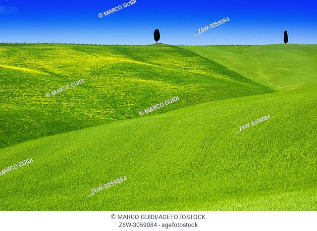 View of the Valley Orcia in the moment of growing grain of green color