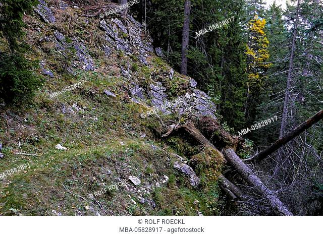 Road interruption by fallen trees in the steep timber forest, Hinterautal, Karwendel, Tyrol