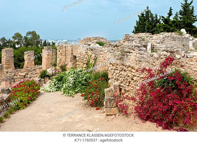 Flowers in the ruins of Carthage near Tunis, Tunisia