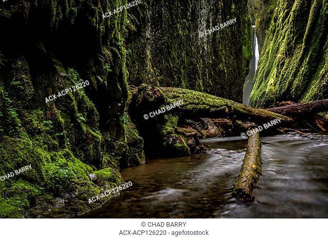 Oneonta Gorge, Oneonta Falls, Columbia River Gorge, Oregon, United States