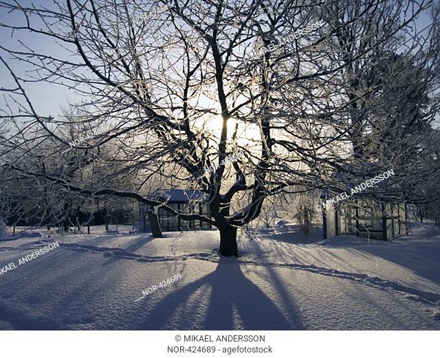 Winter garden  Sweden