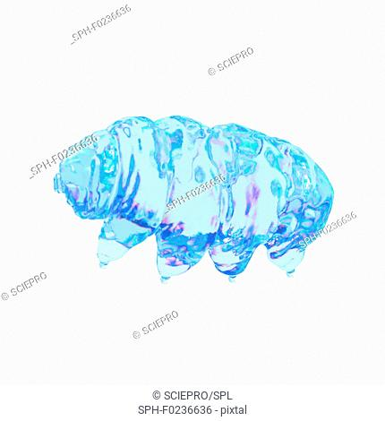 Illustration of a water bear