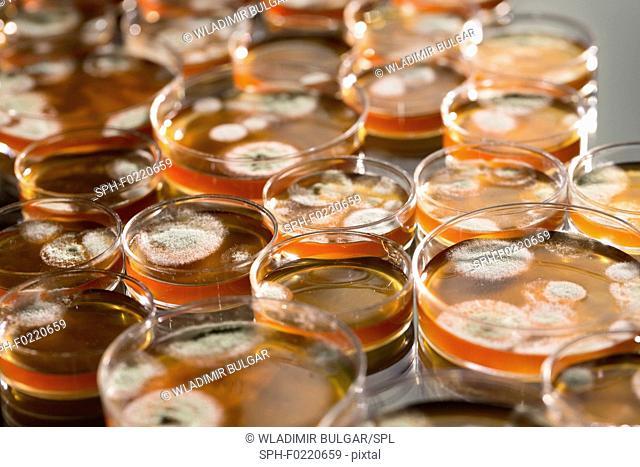 Microbes growing on agar plate