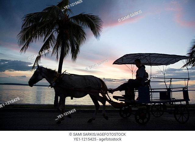 Palm tree and a horse cart at sunset on Cienfuegos Bay, Cuba