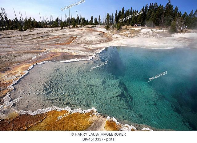 Blackpool, West Thumb Geyser Basin, Yellowstone National Park, Wyoming, USA