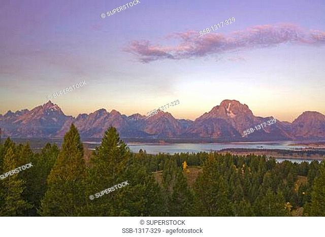 Aspen trees with Mt Moran in the background viewed from Signal Mountain, Signal Mountain, Snake River, Grand Teton National Park, Wyoming, USA