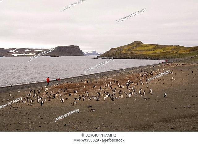 Antarctica, South Shetlands Islands, Aitcho Island, Penguin colony