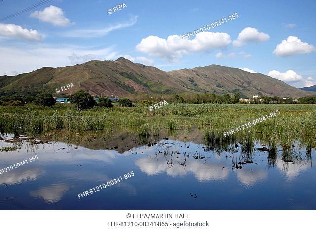 View of marshland habitat, Sha Po Marsh, New Territories, Hong Kong, China, May