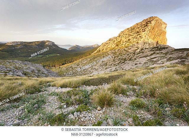 Formentor peninsula, Pollença, Majorca, Balearic Islands, Spain
