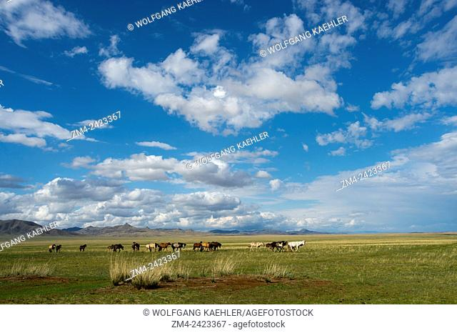 Landscape with horses in Tuul River valley, Hustai National Park, Mongolia