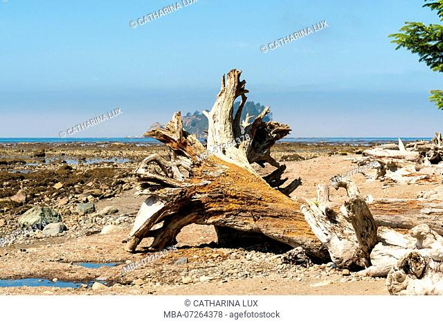Olympic National Park, Loop Trail, Driftwood