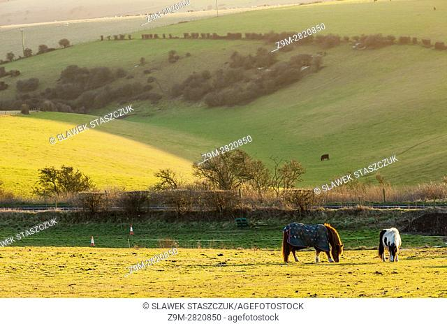 Winter afternoon in South Downs National Park near Brighton; West Sussex, England