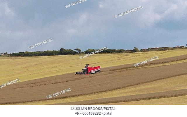 Combine harvester cutting rape field in the distance. time lapse