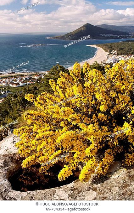 Estuary of Minho River and broom at fore, Portugal