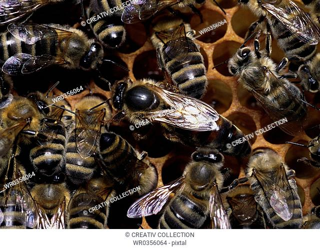 close-up of bees sitting on beeswax