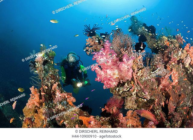 Wreck, Wrecks, Wreckdiving, Wreck diving, Wreckdive, artificial Reef, history, relict, reserve, shipwreck, ship, Boat, Wreckage, subaquatic, sunken, Tragedy
