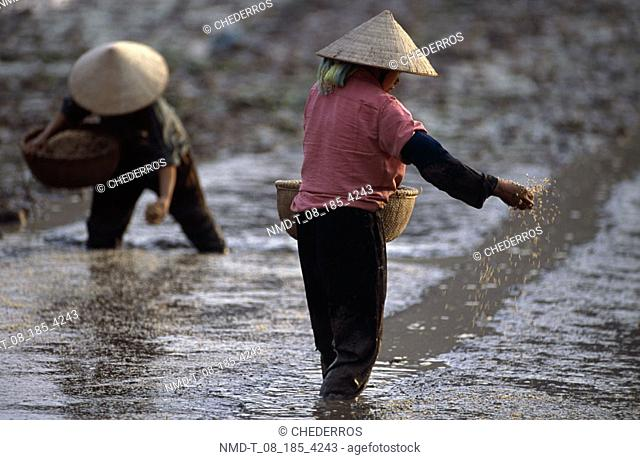 Rear view of a farmer sowing seeds, Vietnam
